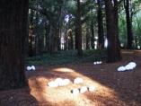 bosque_web1.jpg