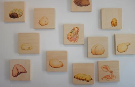 Estudios Amorfos II, Paulina Velázquez Solís. 2014-2016.